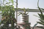 StackingPlanter-Tall-lifestyle-05-CKSP2.jpg
